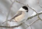 15 января — День зимующих птиц в России