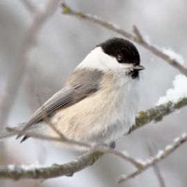 15 января— День зимующих птиц в России