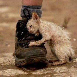 20 августа – Международный день бездомных животных
